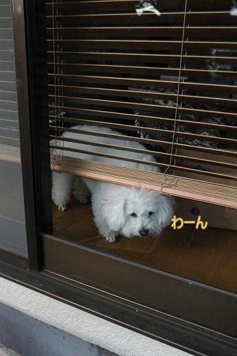 またぽんてぃ ウォッシュ (4)