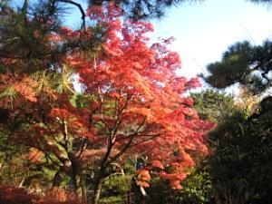 maruyama_1123_4.jpg
