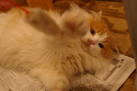 IMGP2646ー猫