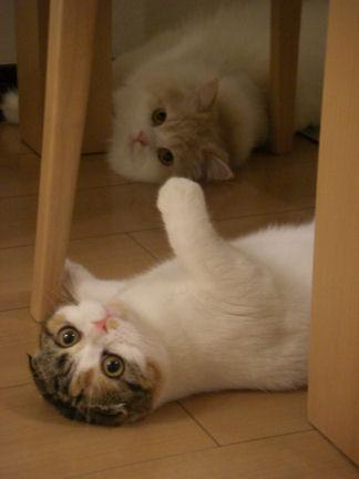 PICT0003ー猫