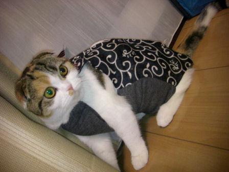 PICT0005ー猫