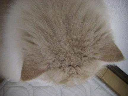 PICT0006ー猫