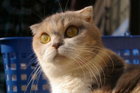 IMGP2679ー猫