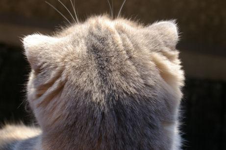IMGP2688ー猫