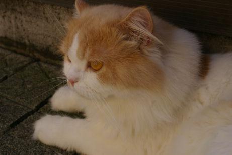 IMGP2570ー猫