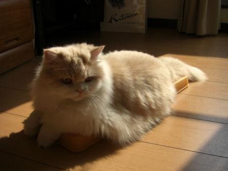 PICT0004ー猫