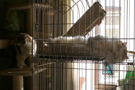 IMGP2667ー猫