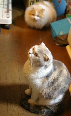 IMGP2822ー猫