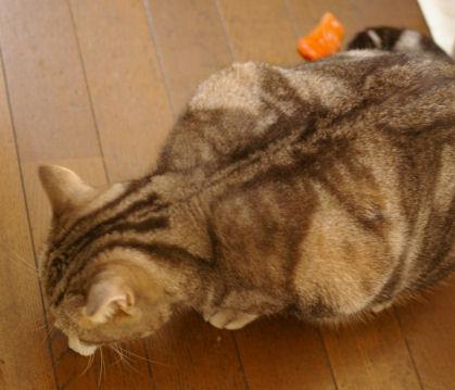 IMGP2831ー猫