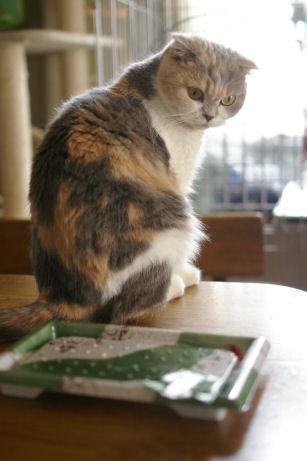 IMGP2840ー猫