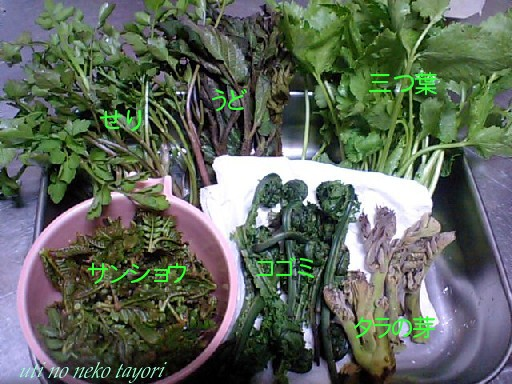 20100417blog山菜