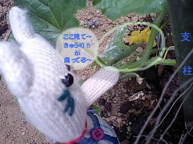 20100705kyuuri1