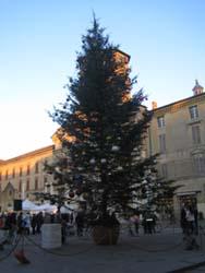 広場のクリスマスツリー