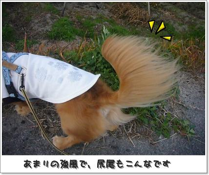 尻尾も風になびいています^^
