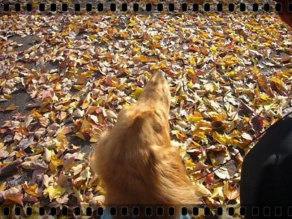 秋も終りね!