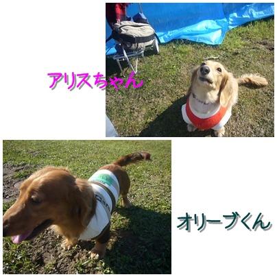アリスちゃん&オリーブくん(紹介)