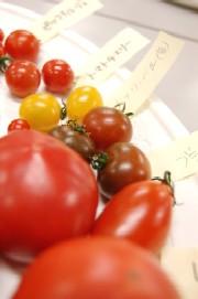 いろいろなトマトたち
