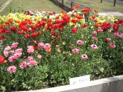 花祭り-4