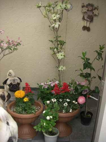 花祭り-22