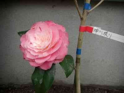 花祭り-30