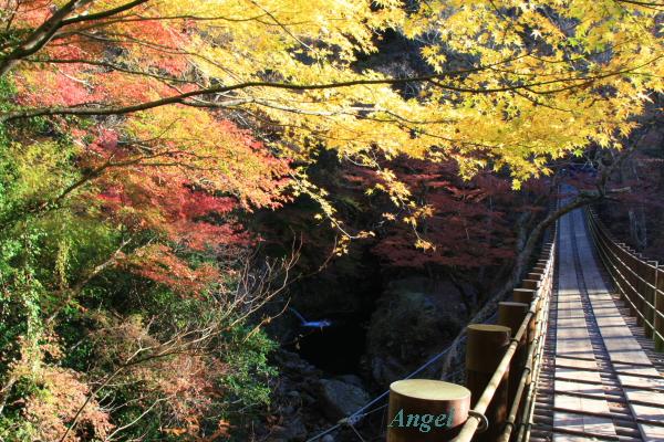 汐見滝吊り橋Angel2