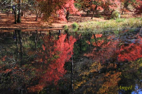 泉自然公園の紅葉Angel2