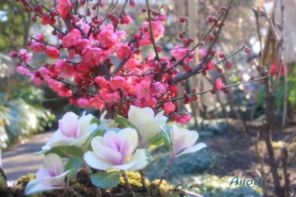 梅と花牡丹Angel1