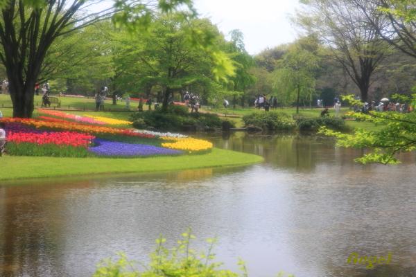 昭和記念公園Angel1