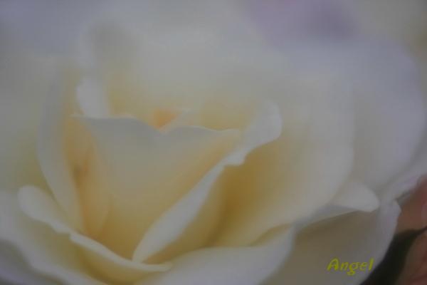 サラトガAngel3(415)