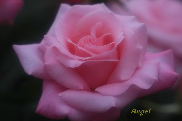 桃香Angel(432)