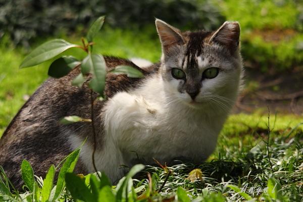 ネコ(72)