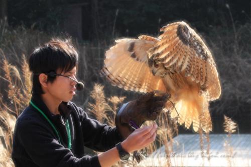 ふくろうショー201105