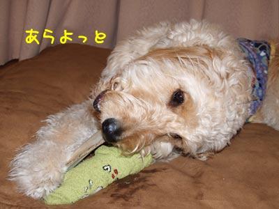 arayoto_20100308191527.jpg