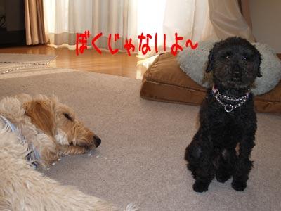 bokujyanai_20100426221111.jpg