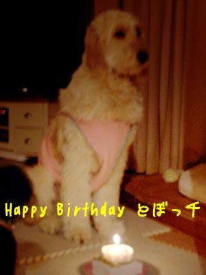 cake-a_20100205231022.jpg