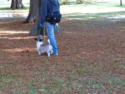 11月29日枯れ葉の上を散歩-1
