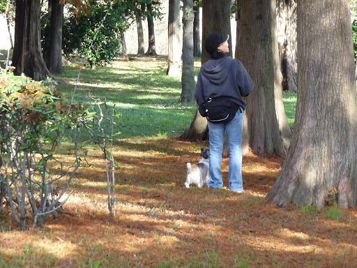 11月29日枯れ葉の上を散歩
