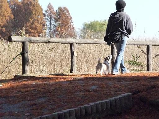11月29日枯れ葉の上を散歩-3