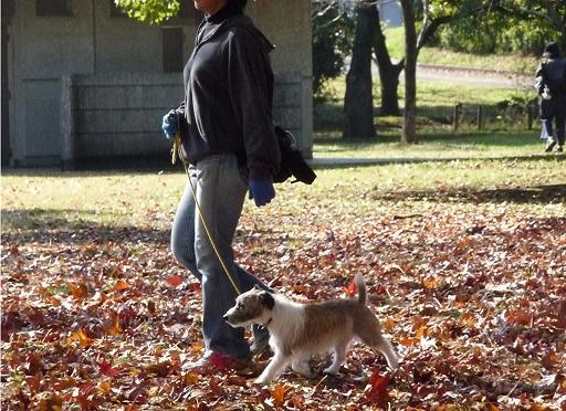 11月29日枯れ葉の上を散歩-5