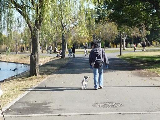 11月29日公園散歩
