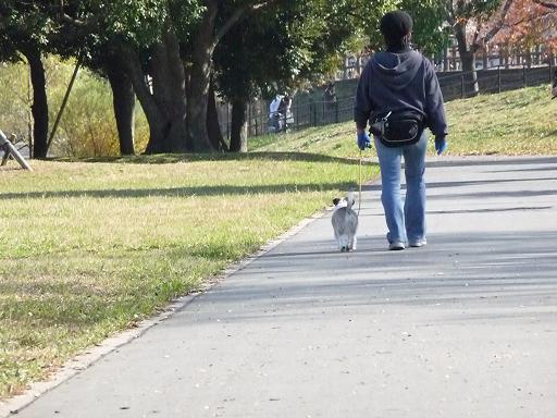 11月29日公園散歩-3