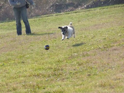 12月4日いつもの場所でボール遊び-2