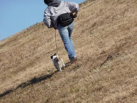 土手の斜面を上がる 必死に歩く