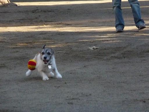 1月26日ボール遊び