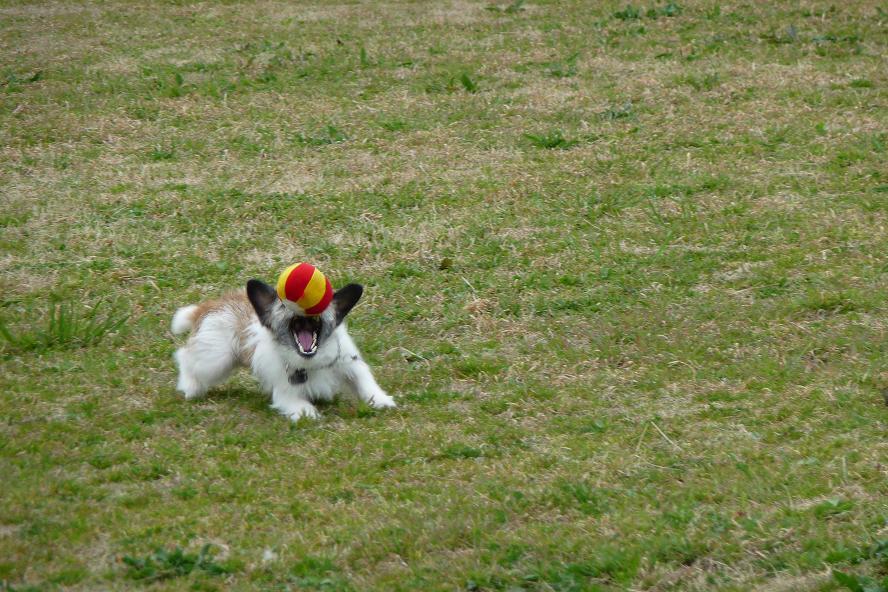 3月24日ボール遊び キャッチ