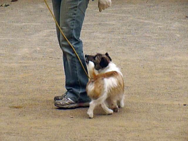 5月16日アトヘの練習 ここでの犬の動きは、分かるかと思いますが・・