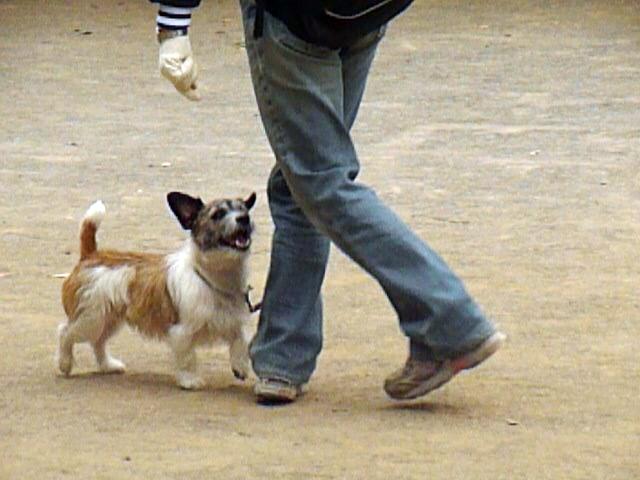 5月16日アトヘの練習 私がどんなふうに動き、この後犬はどのように動くか・・