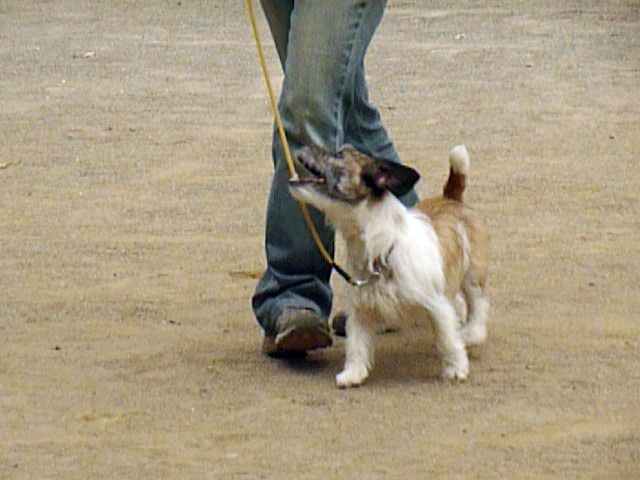 5月16日アトヘの練習 私がどの方向に動き、犬はどのようなラインで脚側についたのか・・