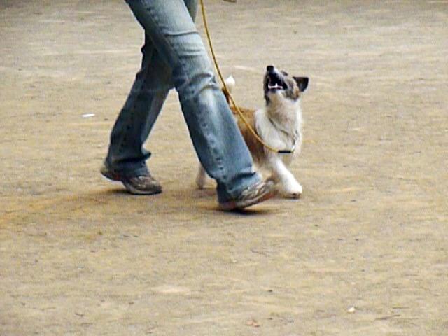 5月16日アトヘの練習 これまでこの練習は犬のための練習だと思っていましたが、本当は人間の練習のためにあるのだと・・今は思います