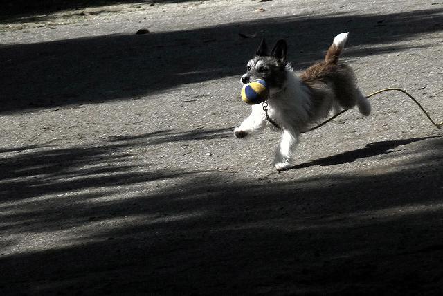 6月7日公園にて ボールで遊ぶ